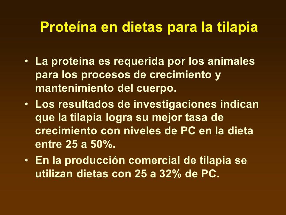 Proteína en dietas para la tilapia