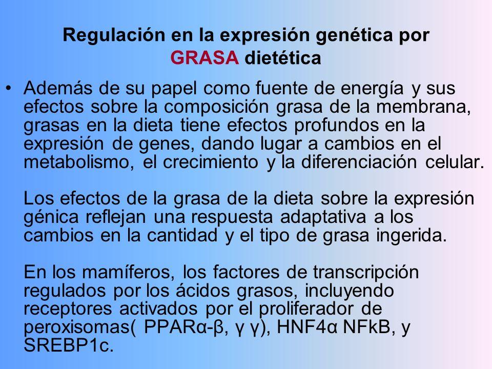 Regulación en la expresión genética por GRASA dietética