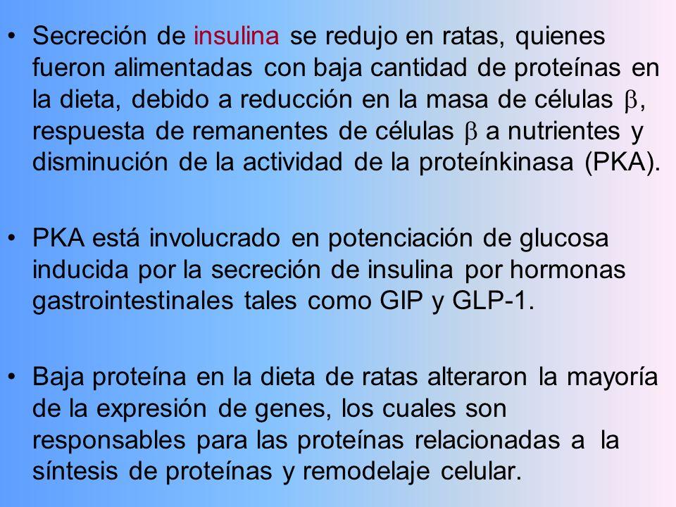 Secreción de insulina se redujo en ratas, quienes fueron alimentadas con baja cantidad de proteínas en la dieta, debido a reducción en la masa de células , respuesta de remanentes de células  a nutrientes y disminución de la actividad de la proteínkinasa (PKA).