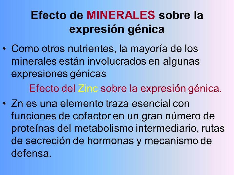 Efecto de MINERALES sobre la expresión génica