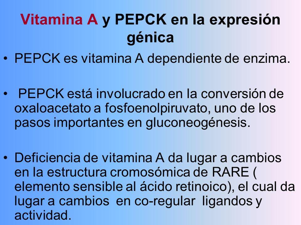 Vitamina A y PEPCK en la expresión génica