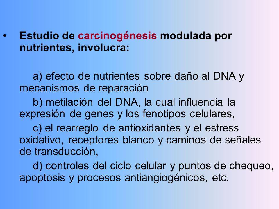 Estudio de carcinogénesis modulada por nutrientes, involucra: