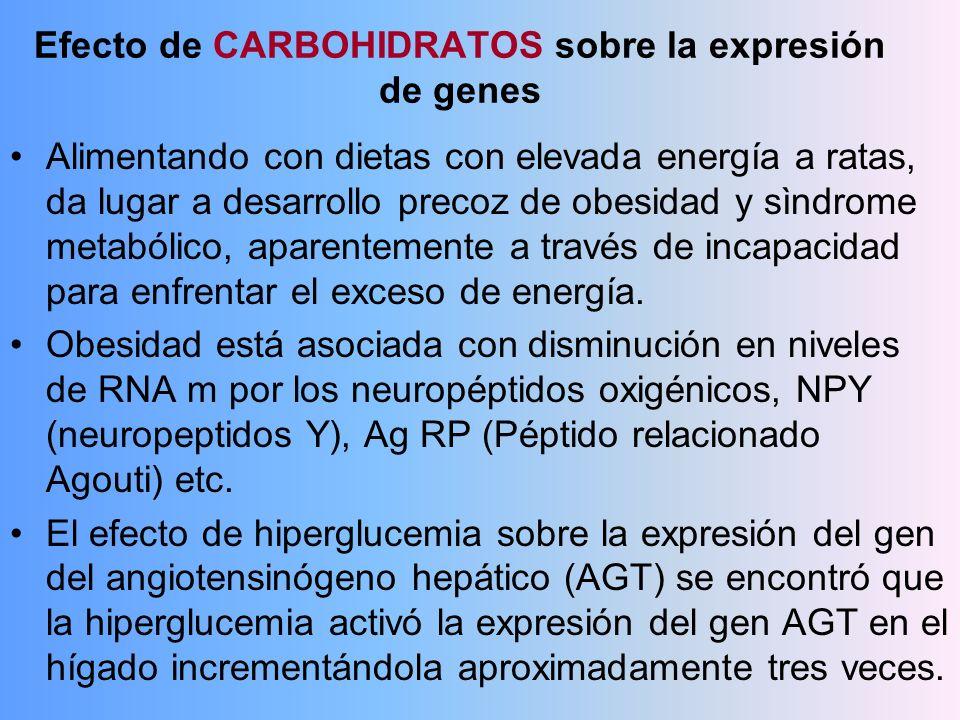 Efecto de CARBOHIDRATOS sobre la expresión de genes