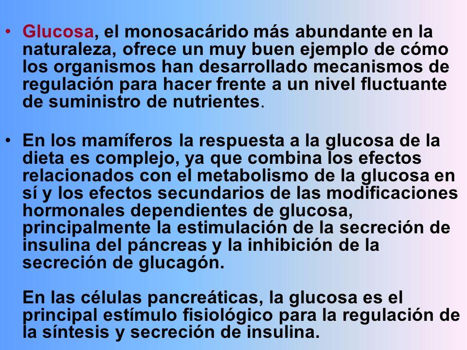 Glucosa, el monosacárido más abundante en la naturaleza, ofrece un muy buen ejemplo de cómo los organismos han desarrollado mecanismos de regulación para hacer frente a un nivel fluctuante de suministro de nutrientes.