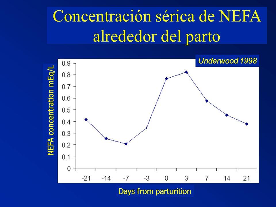 Concentración sérica de NEFA alrededor del parto