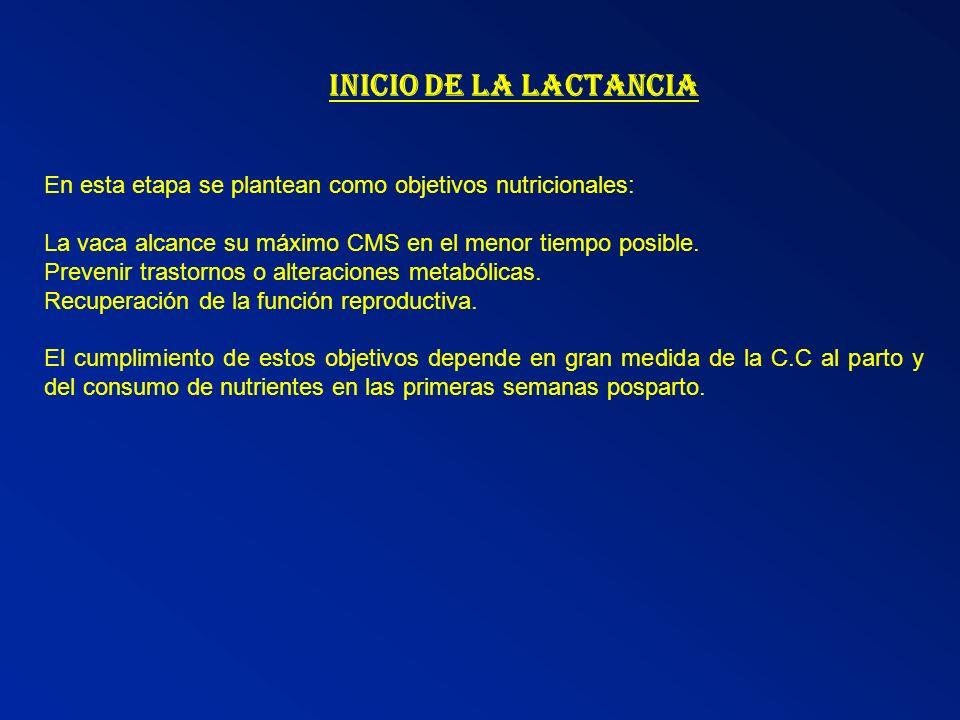 INICIO DE LA LACTANCIA En esta etapa se plantean como objetivos nutricionales: La vaca alcance su máximo CMS en el menor tiempo posible.