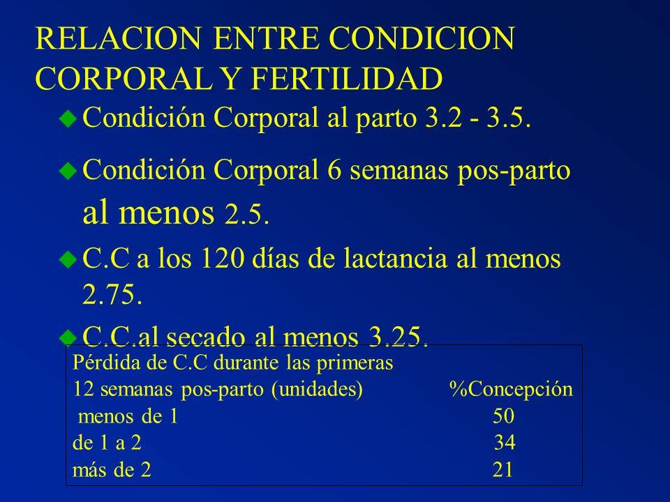 RELACION ENTRE CONDICION CORPORAL Y FERTILIDAD