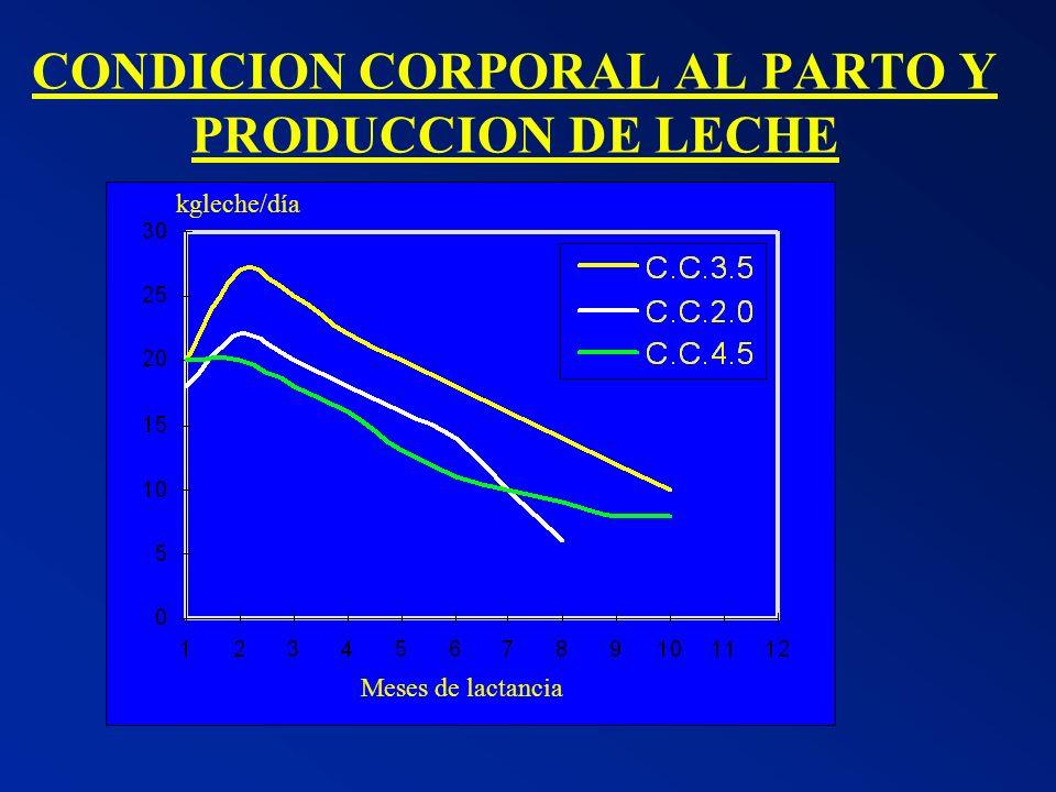 CONDICION CORPORAL AL PARTO Y PRODUCCION DE LECHE