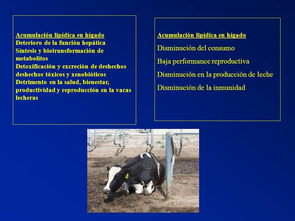 Disminución del consumo Baja performance reproductiva