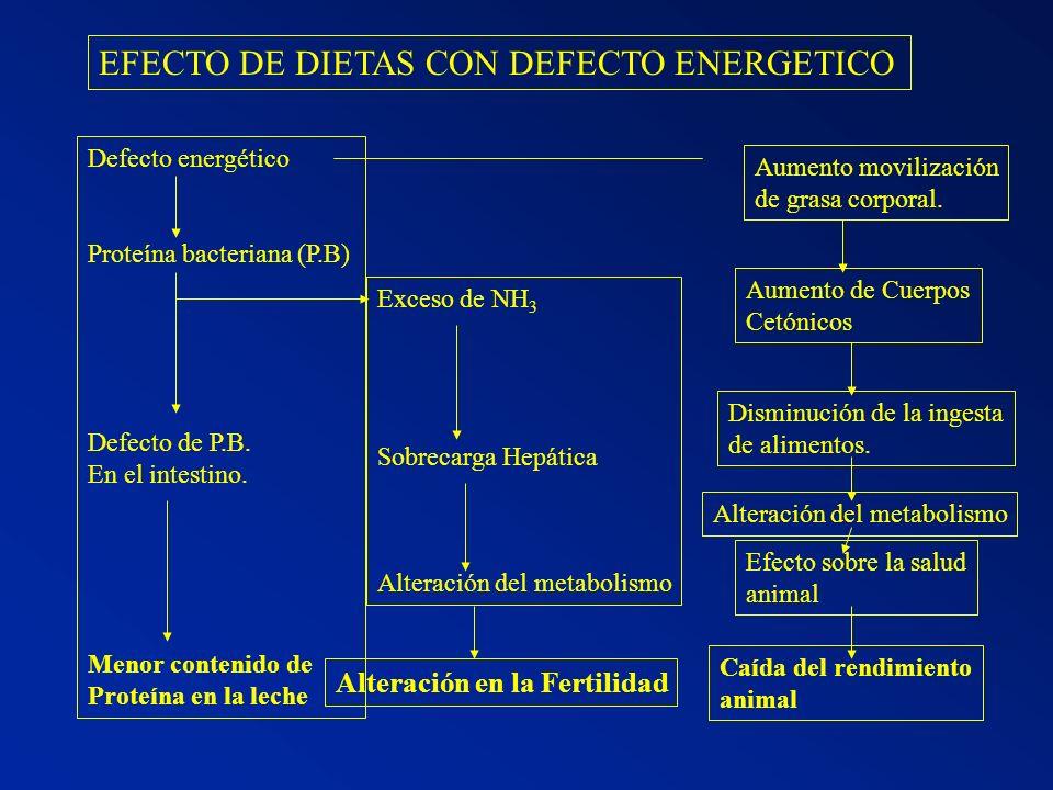 EFECTO DE DIETAS CON DEFECTO ENERGETICO