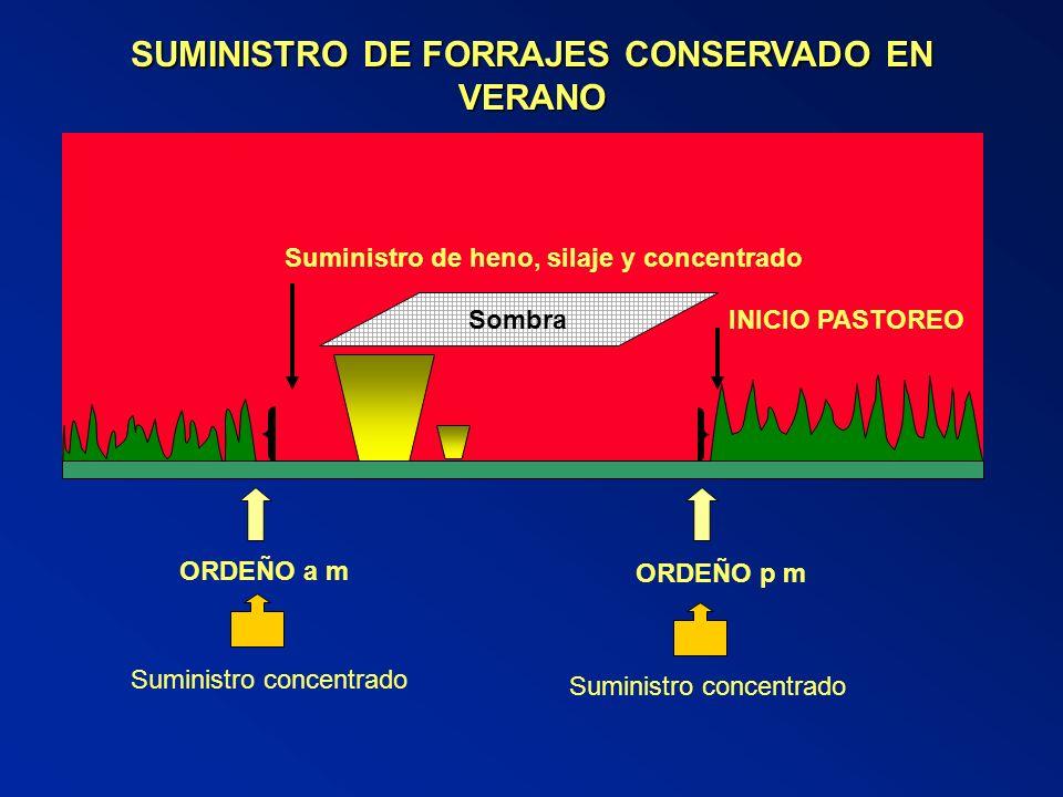 SUMINISTRO DE FORRAJES CONSERVADO EN