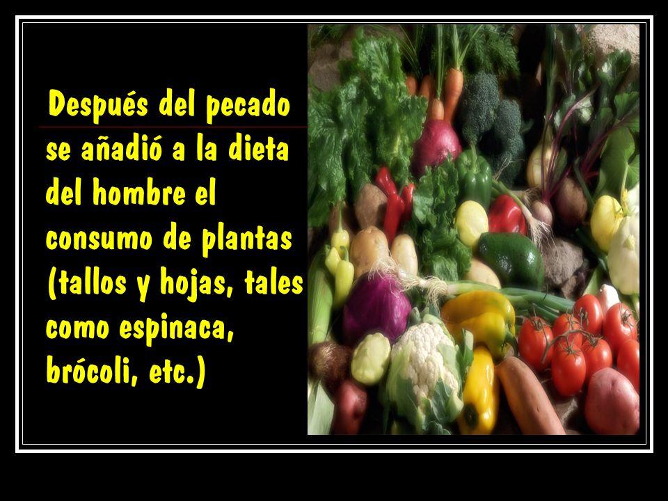 Después del pecado se añadió a la dieta del hombre el consumo de plantas (tallos y hojas, tales como espinaca, brócoli, etc.)