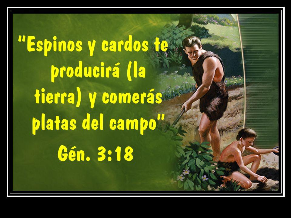 Espinos y cardos te producirá (la tierra) y comerás platas del campo