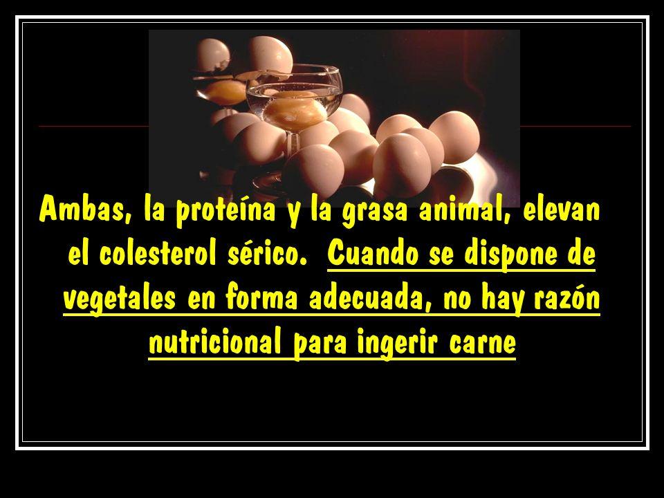 Ambas, la proteína y la grasa animal, elevan el colesterol sérico