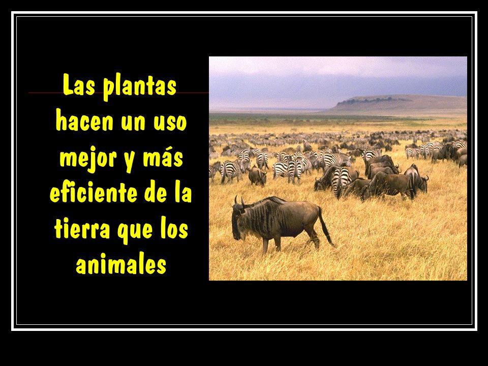 Las plantas hacen un uso mejor y más eficiente de la tierra que los animales