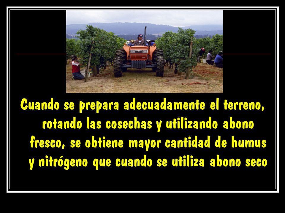 Cuando se prepara adecuadamente el terreno, rotando las cosechas y utilizando abono fresco, se obtiene mayor cantidad de humus y nitrógeno que cuando se utiliza abono seco