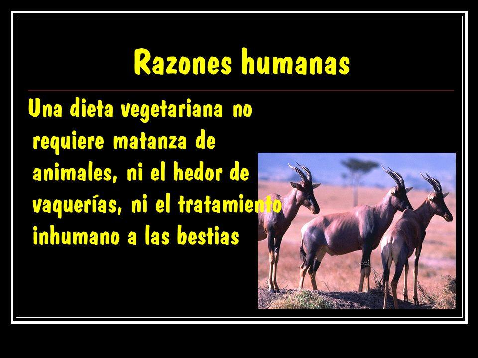 Razones humanas Una dieta vegetariana no requiere matanza de animales, ni el hedor de vaquerías, ni el tratamiento inhumano a las bestias.