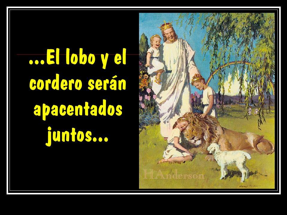 ...El lobo y el cordero serán apacentados juntos...