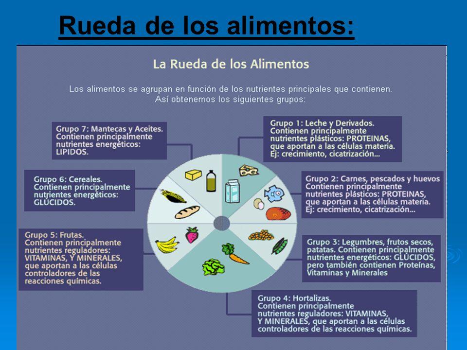 Rueda de los alimentos: