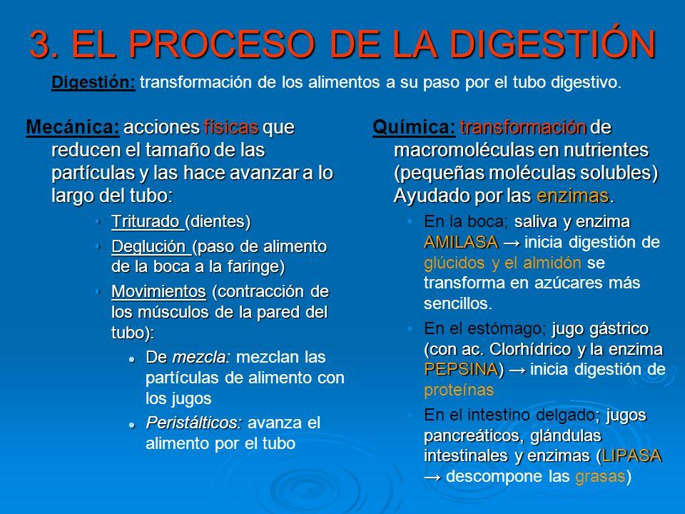 3. EL PROCESO DE LA DIGESTIÓN