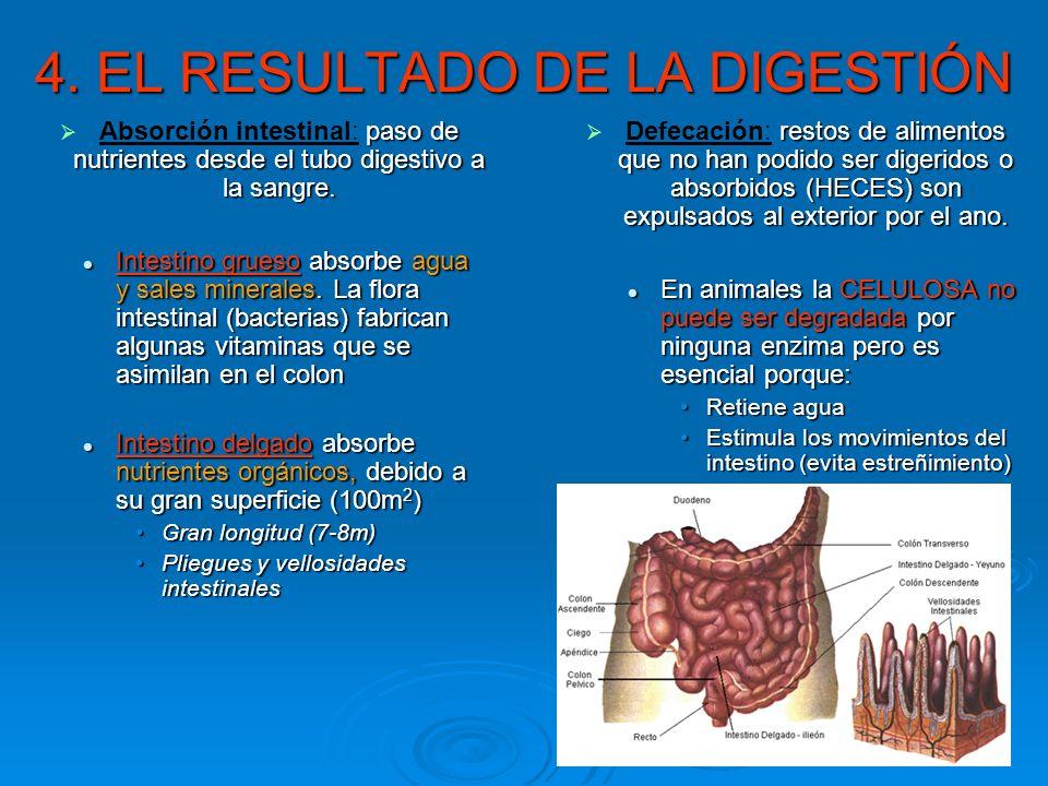4. EL RESULTADO DE LA DIGESTIÓN
