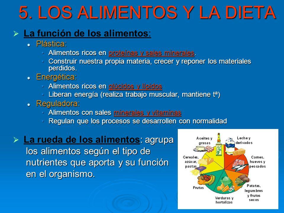 5. LOS ALIMENTOS Y LA DIETA