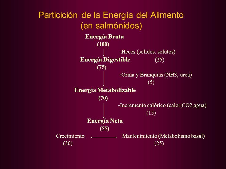 Particición de la Energía del Alimento (en salmónidos)
