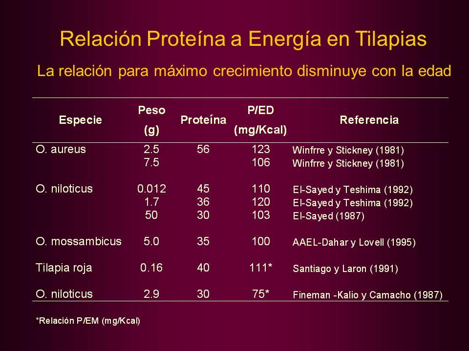 Relación Proteína a Energía en Tilapias