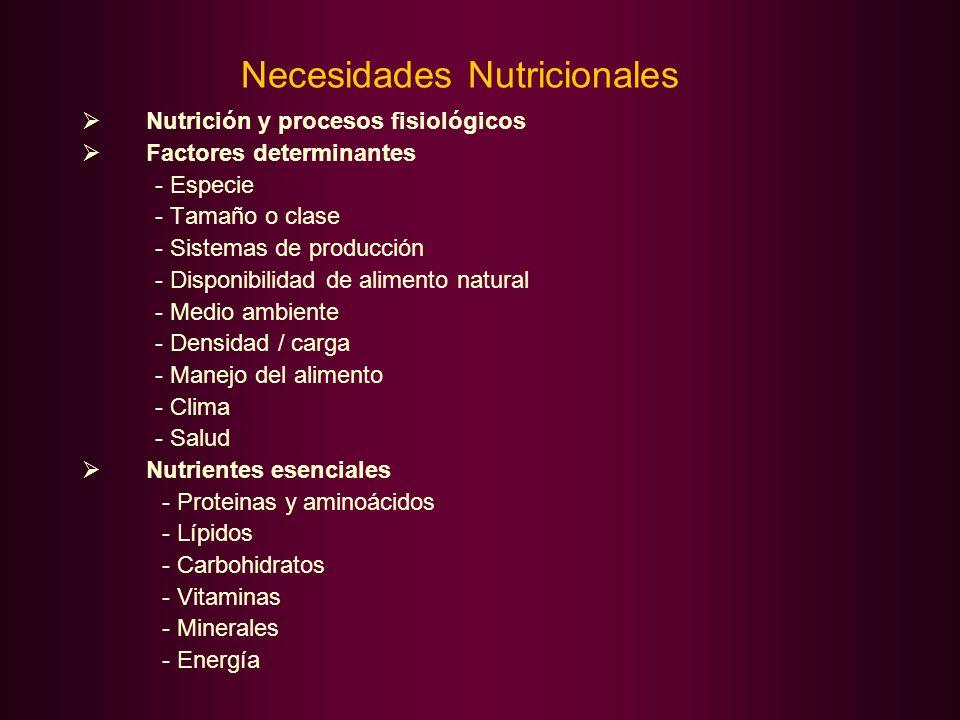 Necesidades Nutricionales