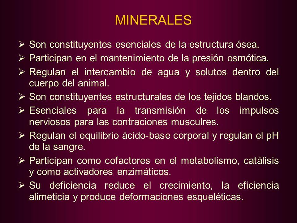 MINERALES Son constituyentes esenciales de la estructura ósea.