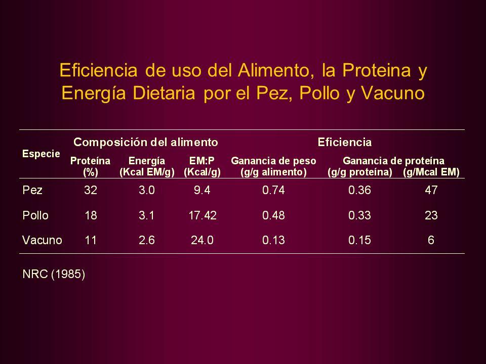Eficiencia de uso del Alimento, la Proteina y Energía Dietaria por el Pez, Pollo y Vacuno