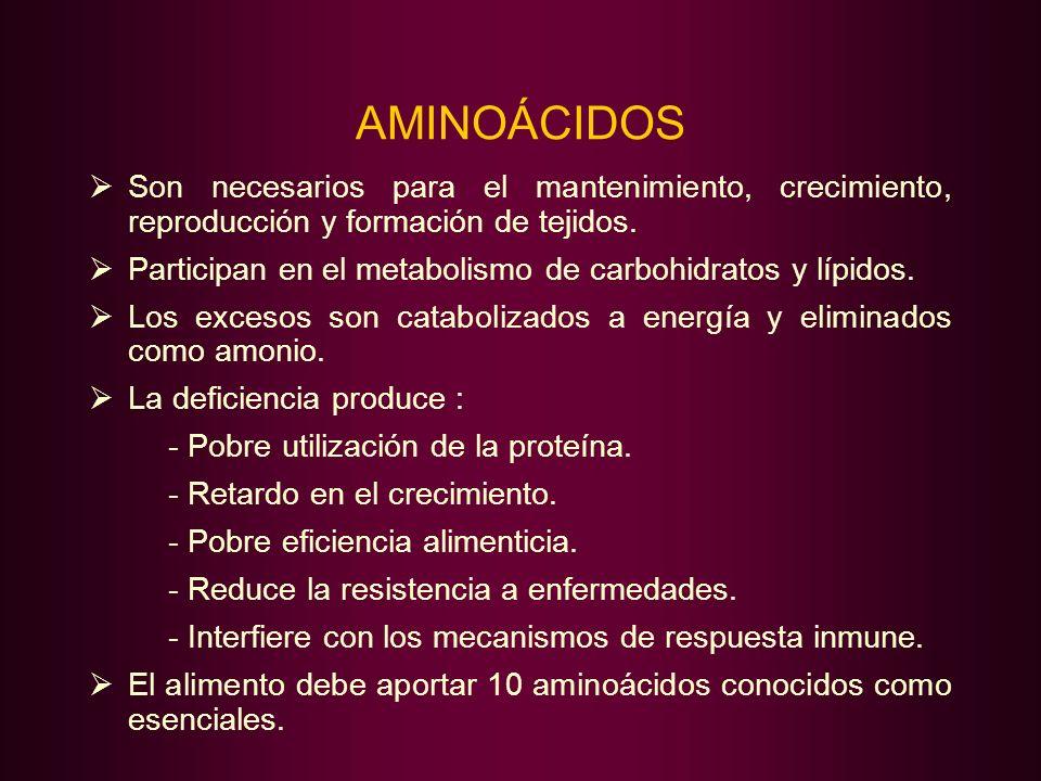 AMINOÁCIDOS Son necesarios para el mantenimiento, crecimiento, reproducción y formación de tejidos.