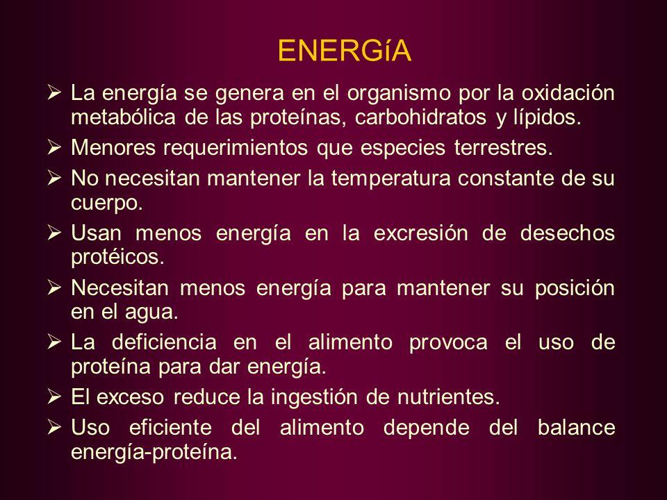 ENERGíA La energía se genera en el organismo por la oxidación metabólica de las proteínas, carbohidratos y lípidos.