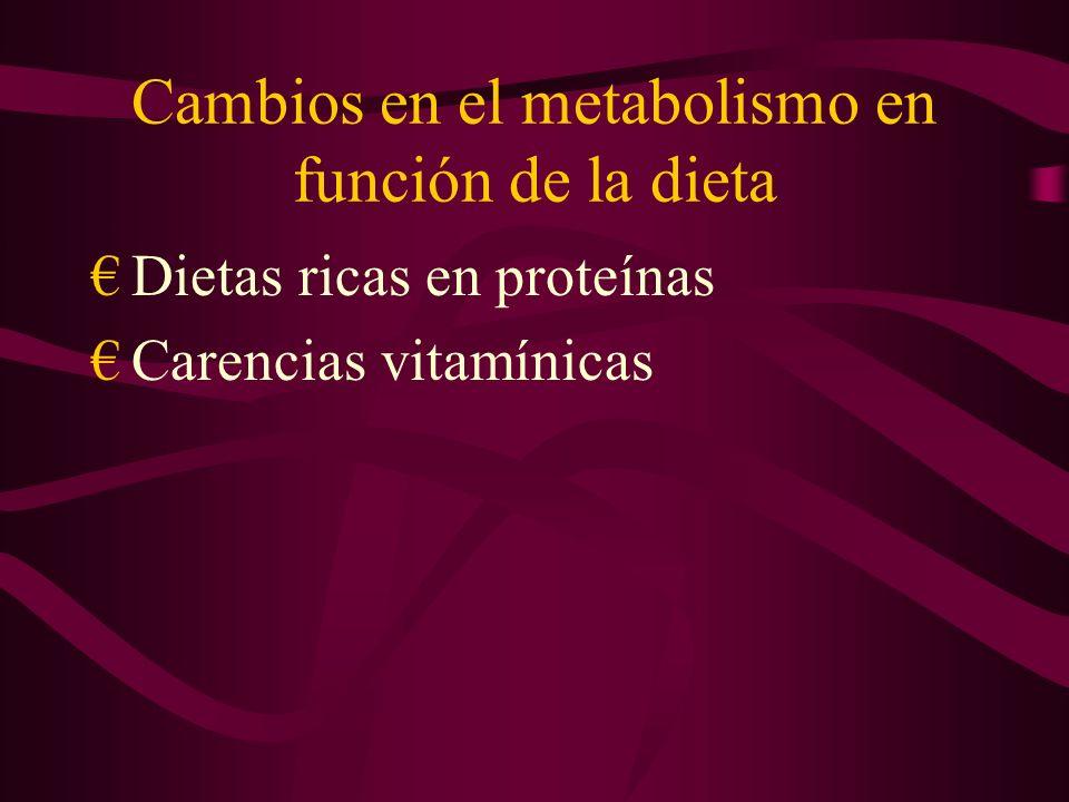 Cambios en el metabolismo en función de la dieta