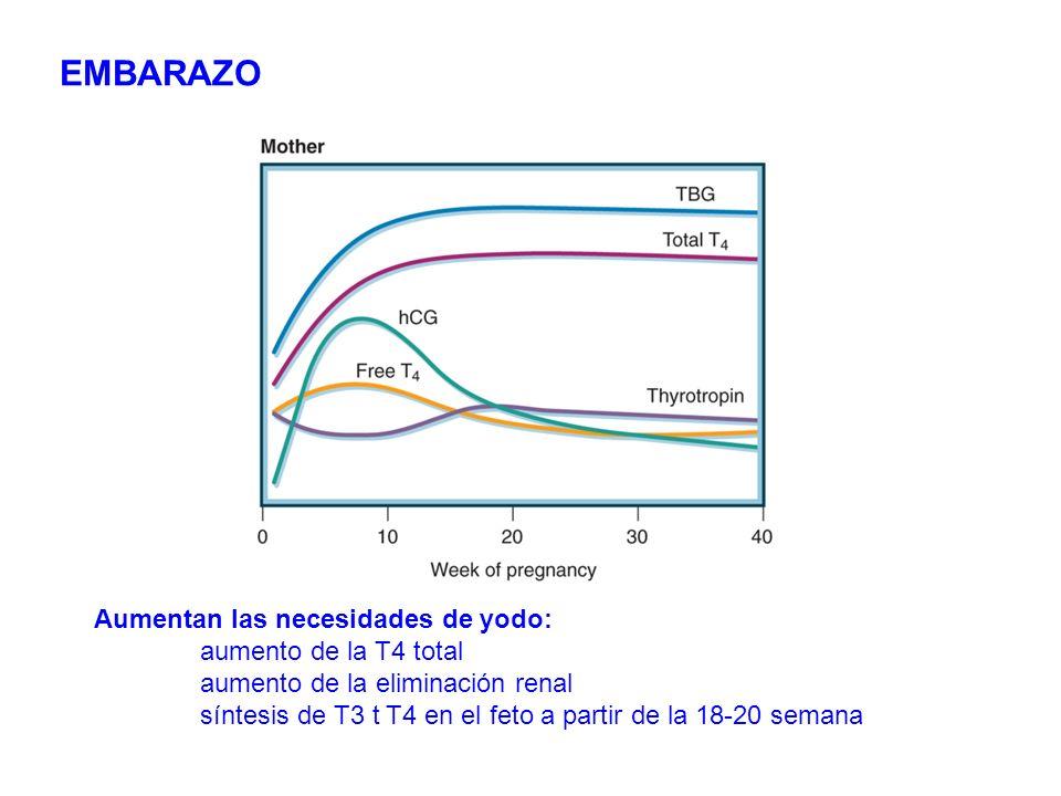 EMBARAZO Aumentan las necesidades de yodo: aumento de la T4 total