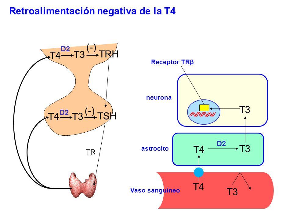 Retroalimentación negativa de la T4