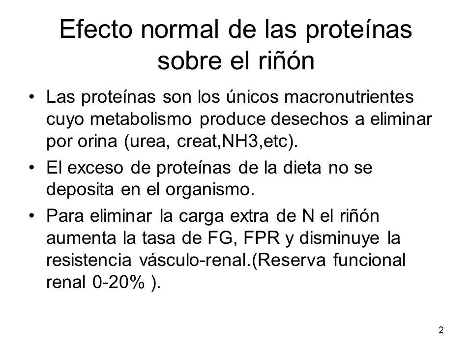 Efecto normal de las proteínas sobre el riñón