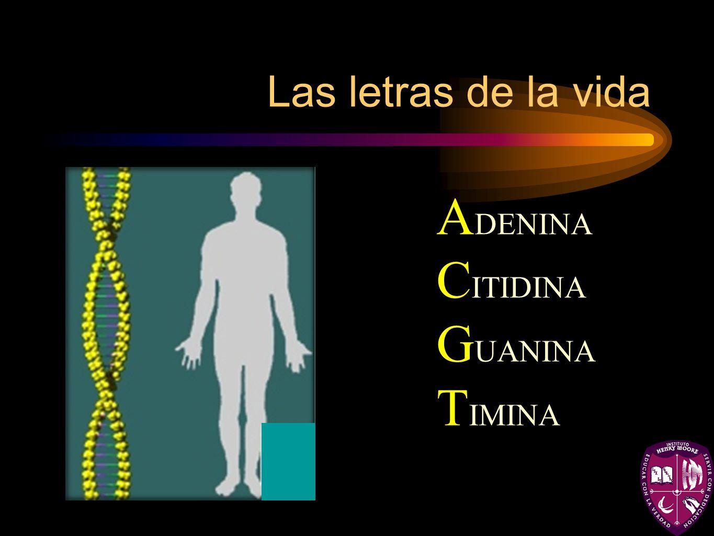 Las letras de la vida ADENINA CITIDINA GUANINA TIMINA