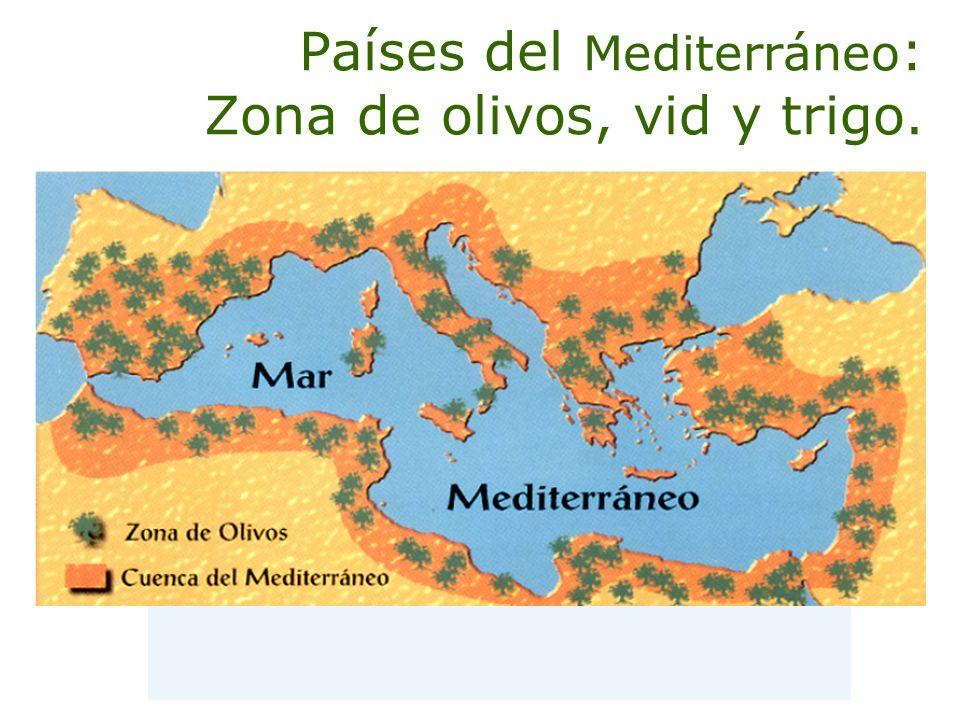 Países del Mediterráneo: Zona de olivos, vid y trigo.