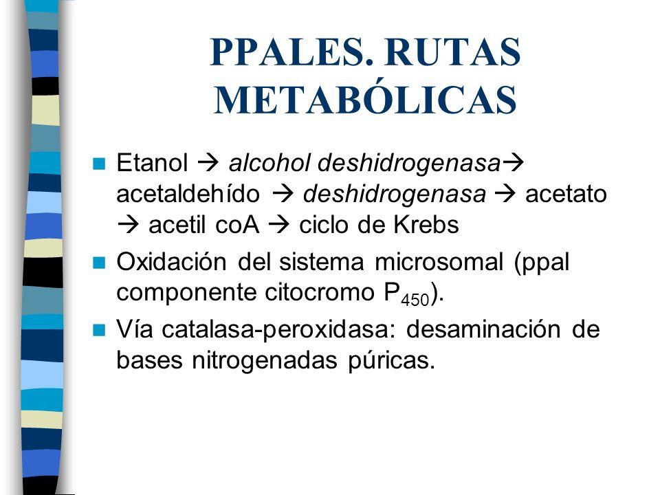 PPALES. RUTAS METABÓLICAS