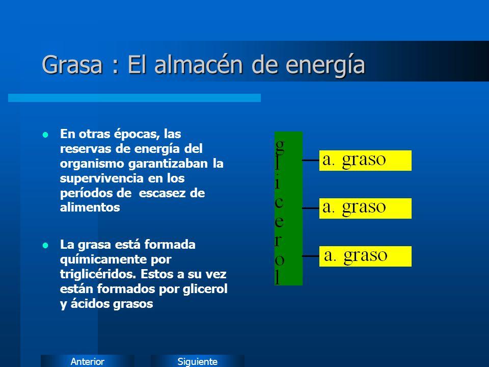 Grasa : El almacén de energía
