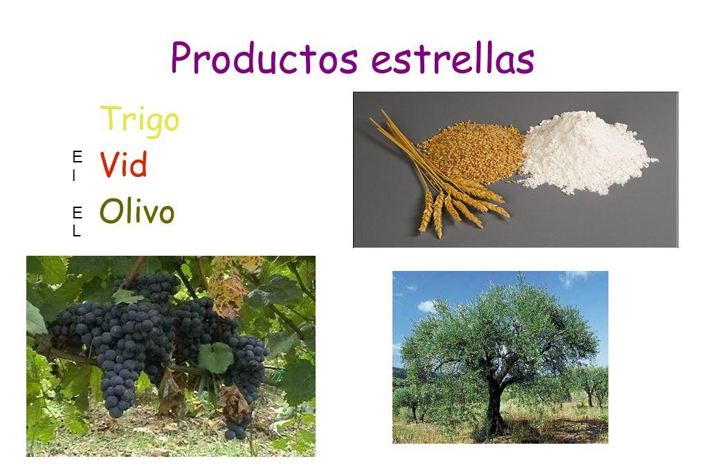 Productos estrellas Trigo Vid Olivo El EL