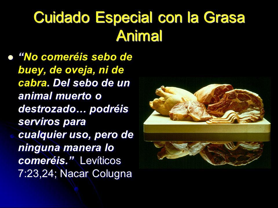 Cuidado Especial con la Grasa Animal