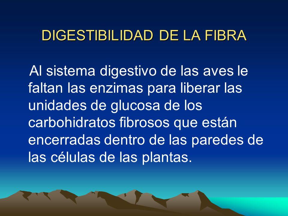 DIGESTIBILIDAD DE LA FIBRA