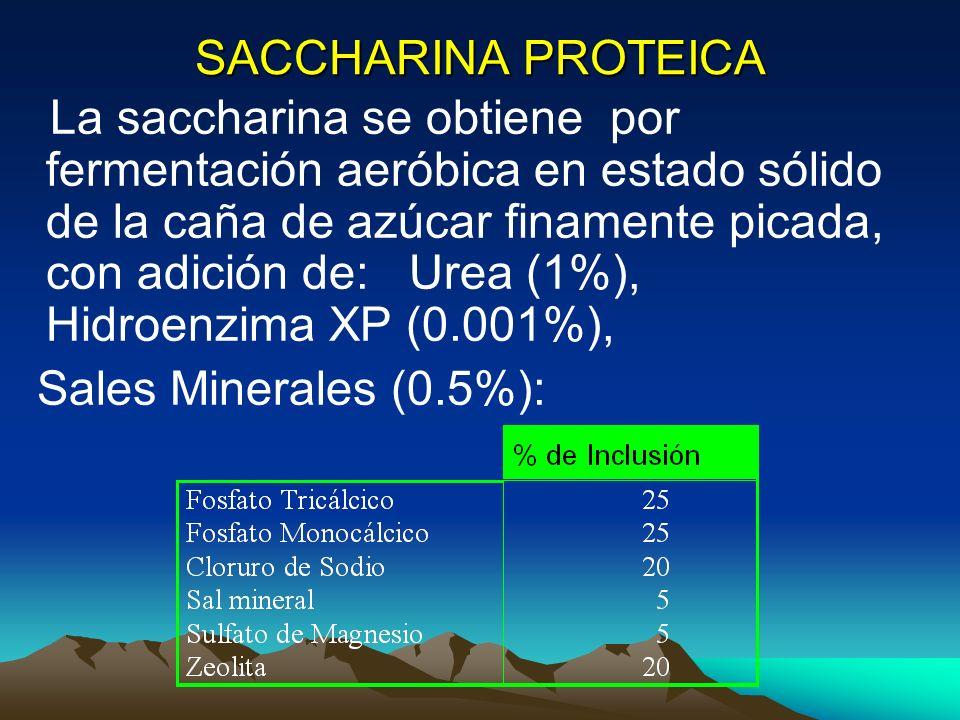 SACCHARINA PROTEICA