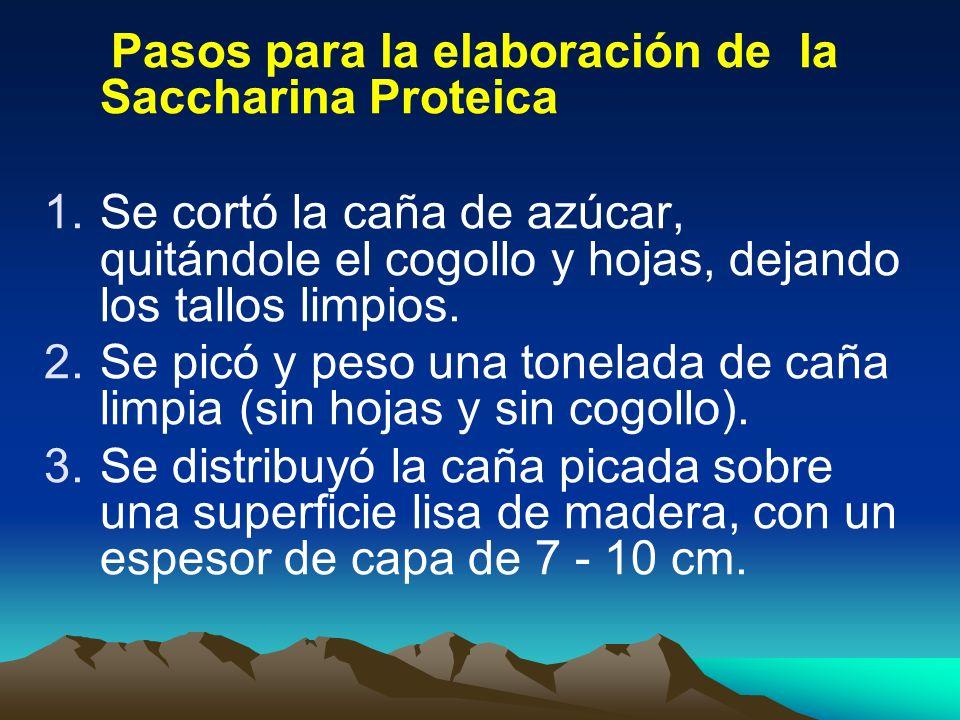Pasos para la elaboración de la Saccharina Proteica