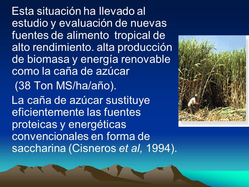 Esta situación ha llevado al estudio y evaluación de nuevas fuentes de alimento tropical de alto rendimiento. alta producción de biomasa y energía renovable como la caña de azúcar