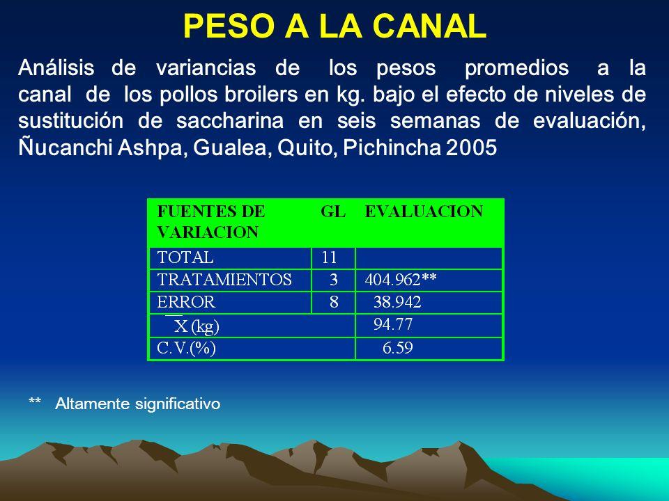 PESO A LA CANAL