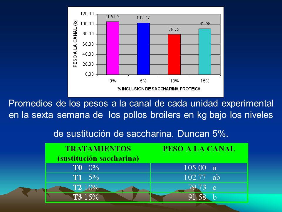 Promedios de los pesos a la canal de cada unidad experimental en la sexta semana de los pollos broilers en kg bajo los niveles de sustitución de saccharina.