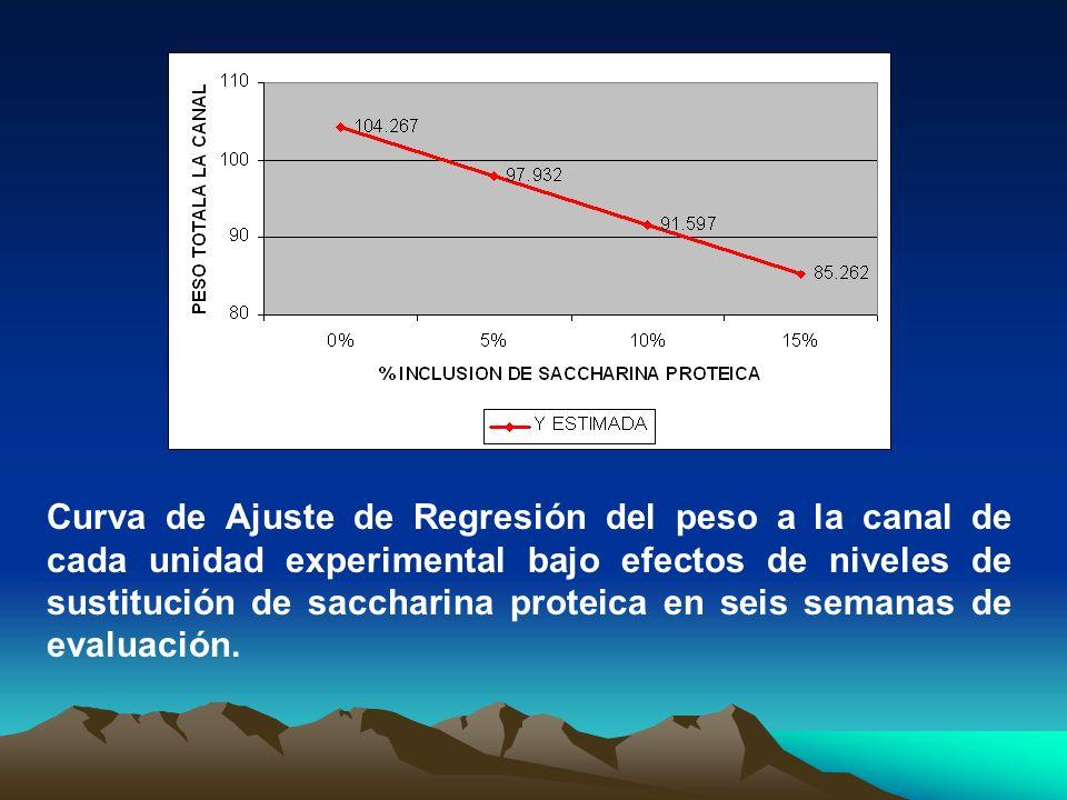 Curva de Ajuste de Regresión del peso a la canal de cada unidad experimental bajo efectos de niveles de sustitución de saccharina proteica en seis semanas de evaluación.